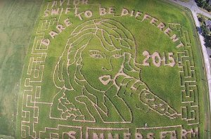 swift corn maze